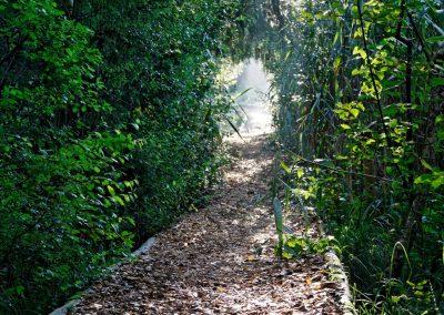 IMG_4129 sentier 16-8-2008
